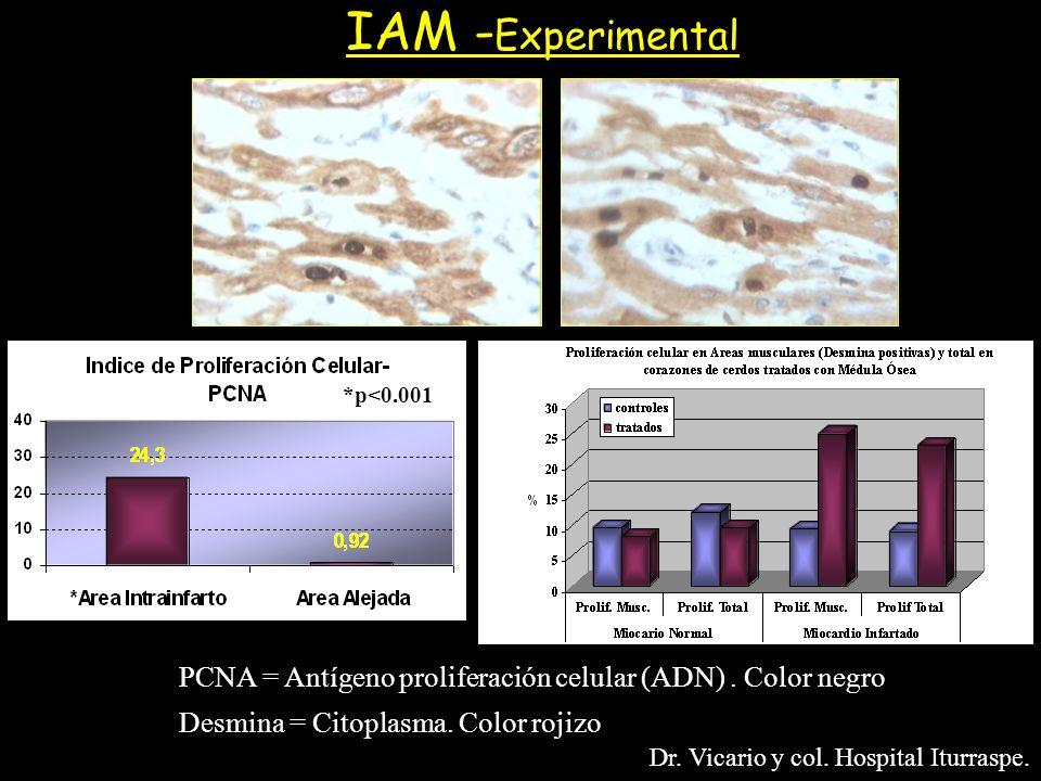 IAM -Experimental *p<0.001. PCNA = Antígeno proliferación celular (ADN) . Color negro. Desmina = Citoplasma. Color rojizo.