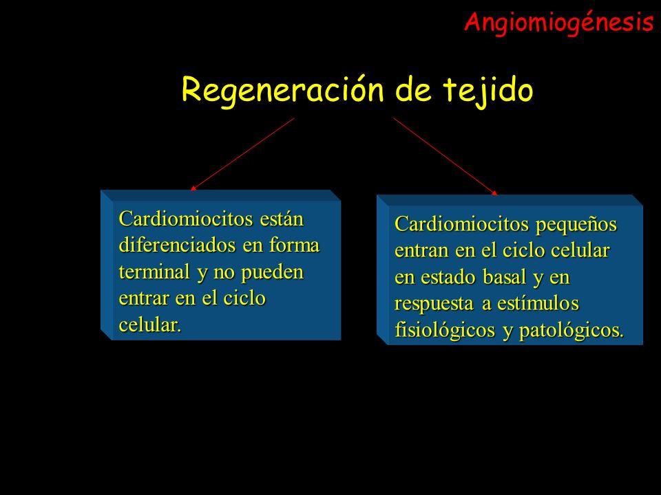 Regeneración de tejido