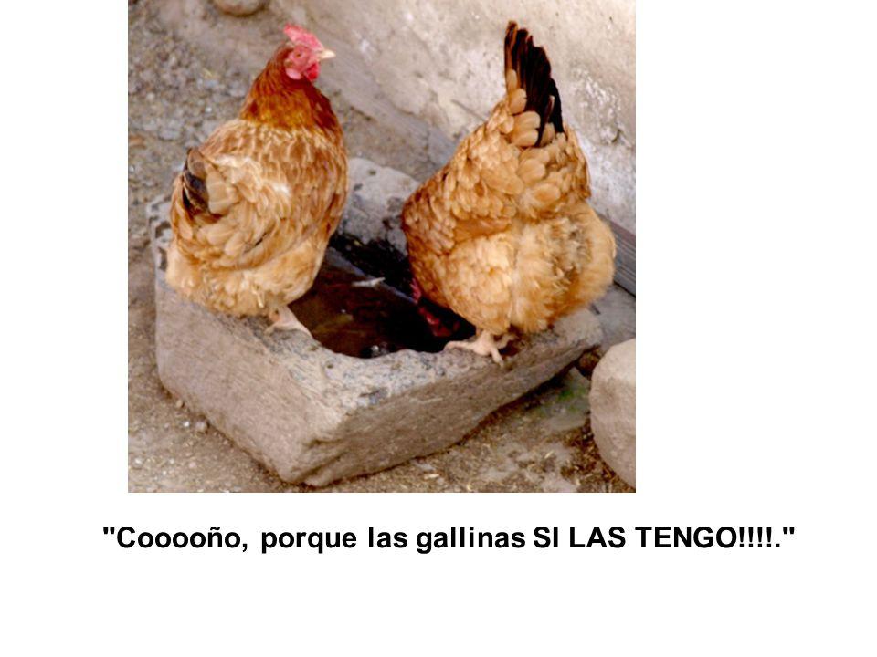Cooooño, porque las gallinas SI LAS TENGO!!!!.