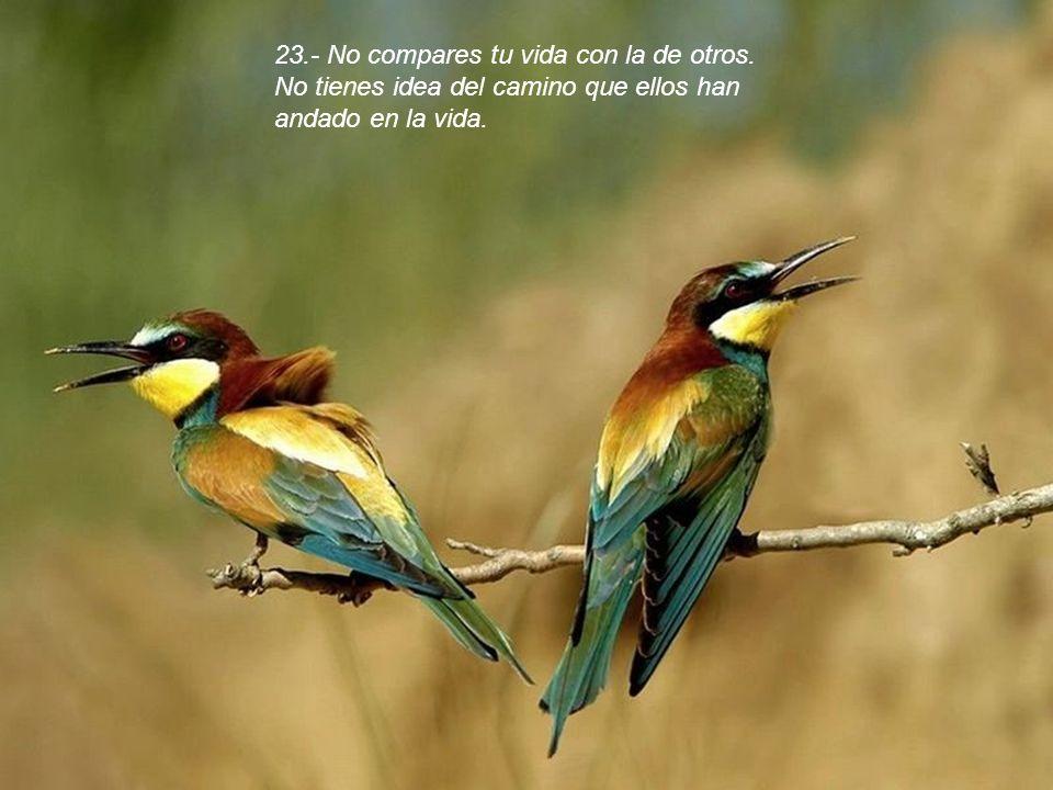 23. - No compares tu vida con la de otros