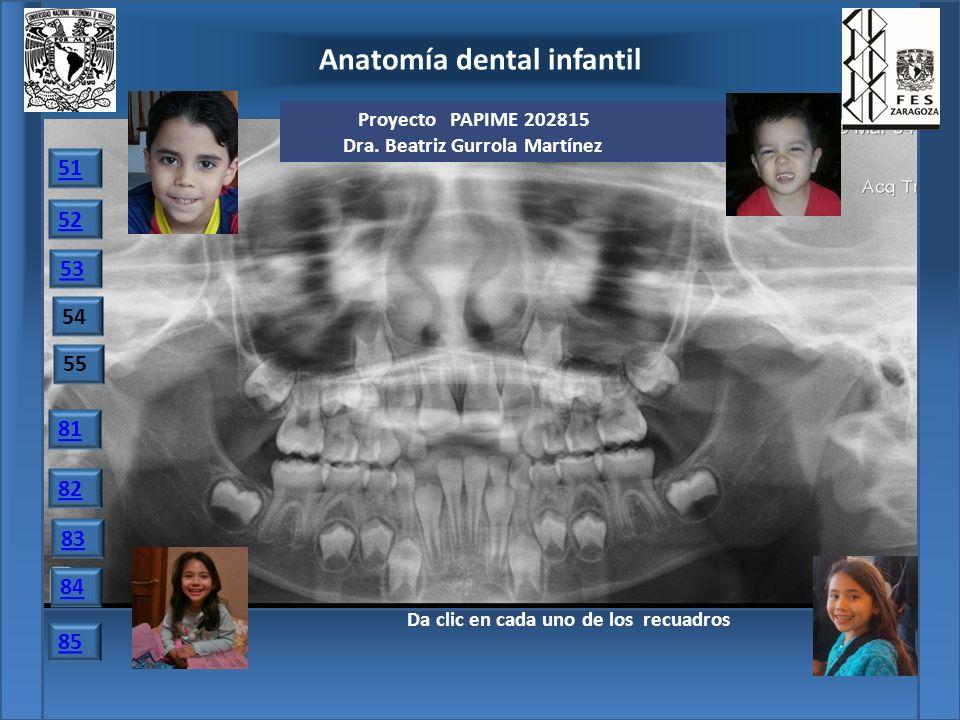 Famoso Anatomía Dental Comparada Colección - Imágenes de Anatomía ...
