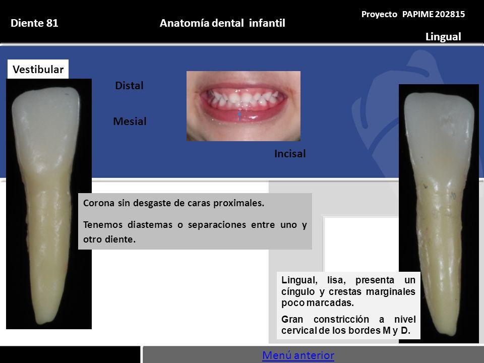 Asombroso Anatomía Dental Comparada Patrón - Imágenes de Anatomía ...