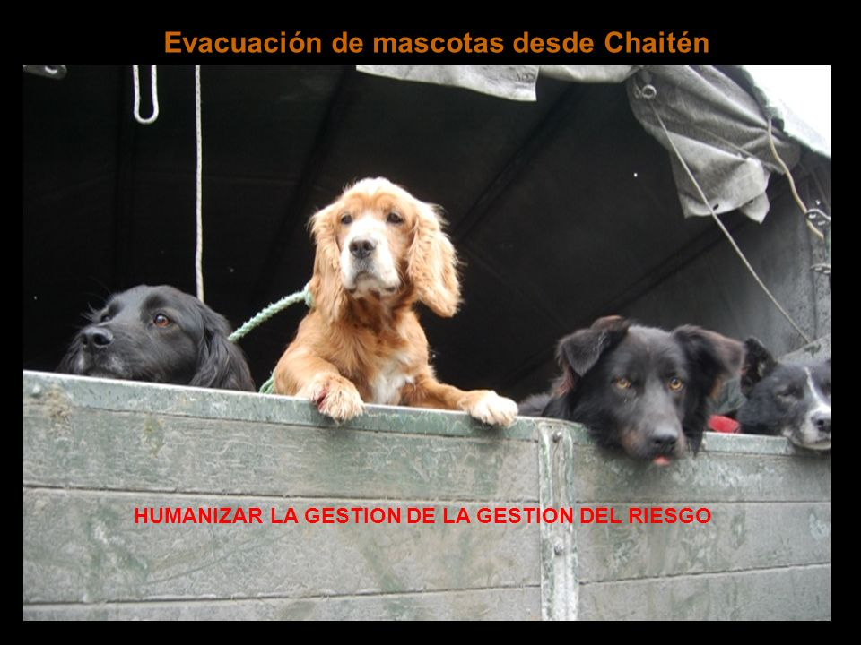 Evacuación de mascotas desde Chaitén