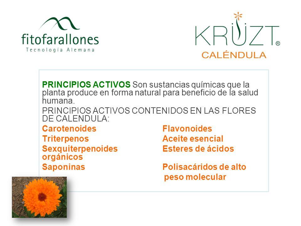 PRINCIPIOS ACTIVOS CONTENIDOS EN LAS FLORES DE CALENDULA: