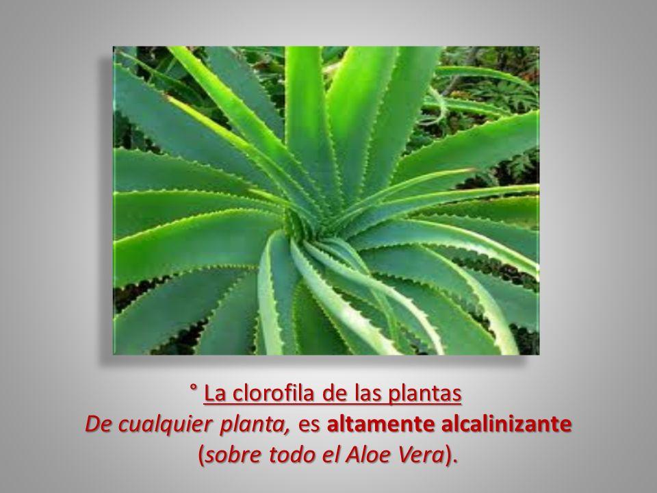 ° La clorofila de las plantas