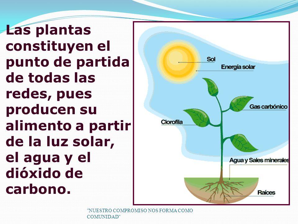 Las plantas constituyen el punto de partida de todas las redes, pues producen su