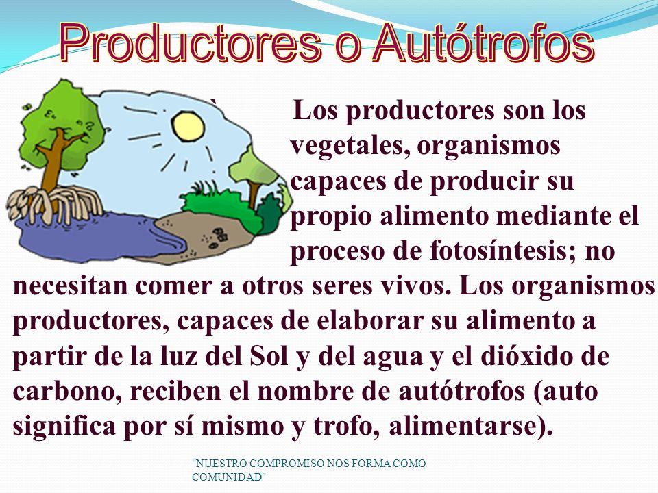 Productores o Autótrofos