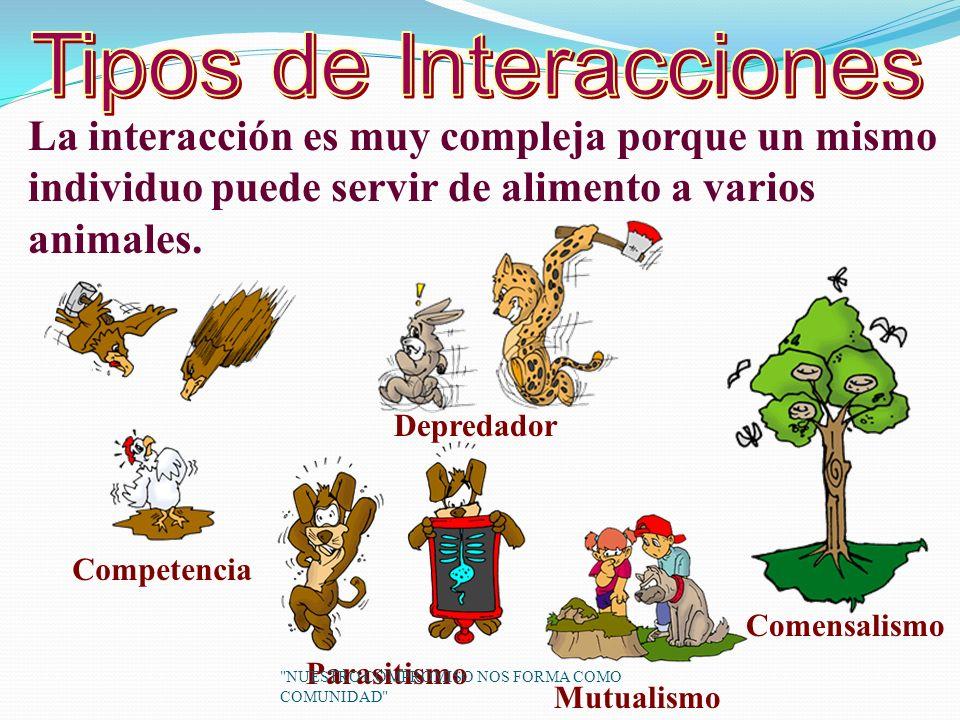 Tipos de Interacciones