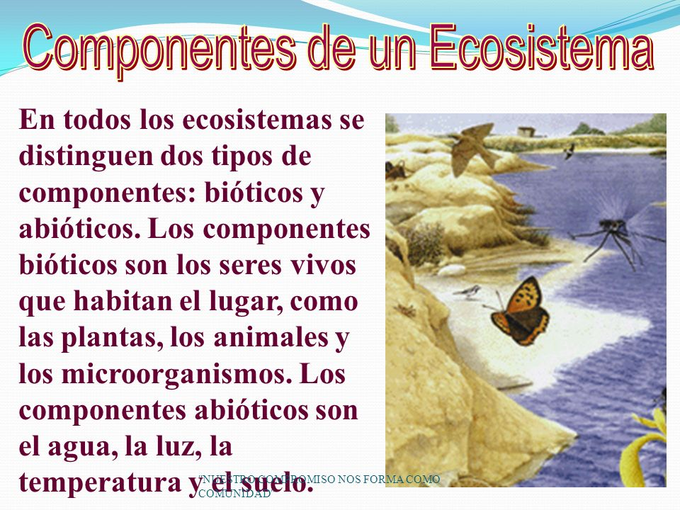 Componentes de un Ecosistema