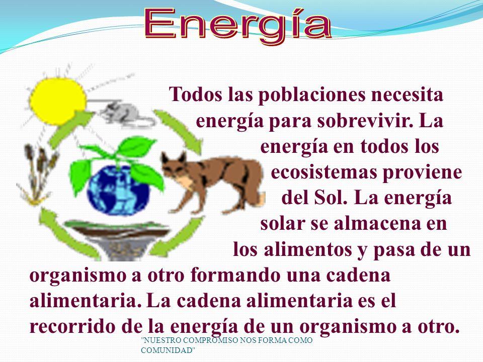 Energía Todos las poblaciones necesita energía para sobrevivir. La
