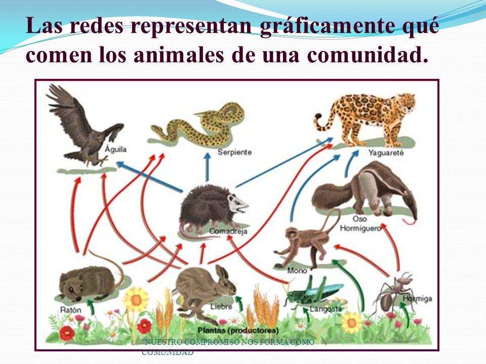 Las redes representan gráficamente qué comen los animales de una comunidad.