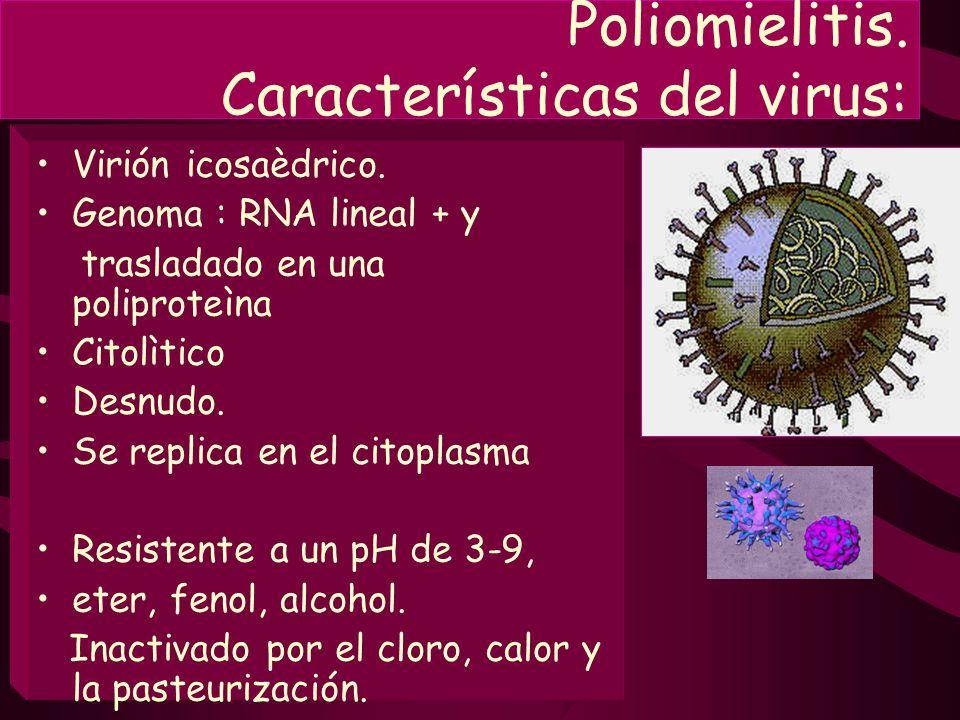 Poliomielitis. Características del virus:
