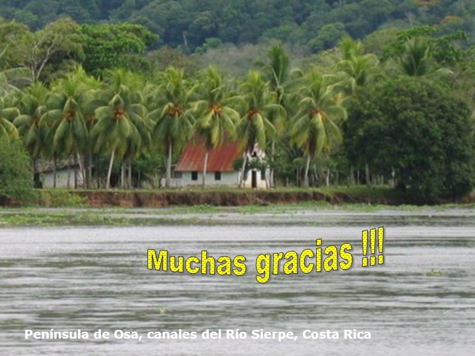 Muchas gracias !!! Península de Osa, canales del Río Sierpe, Costa Rica