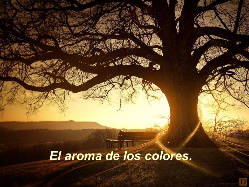 El aroma de los colores.