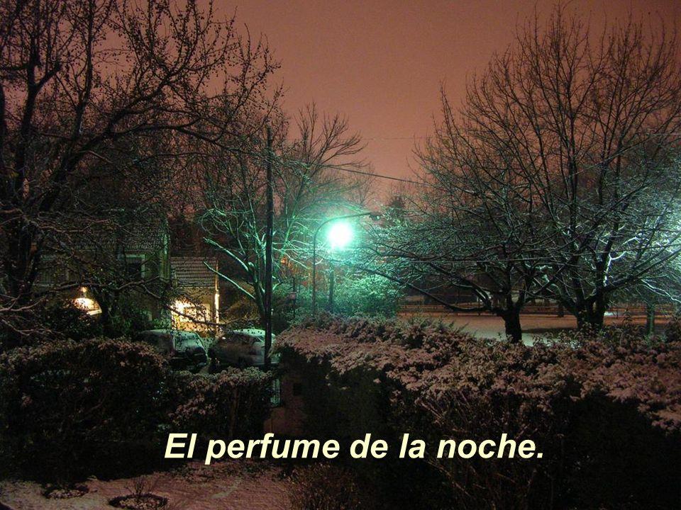 El perfume de la noche.