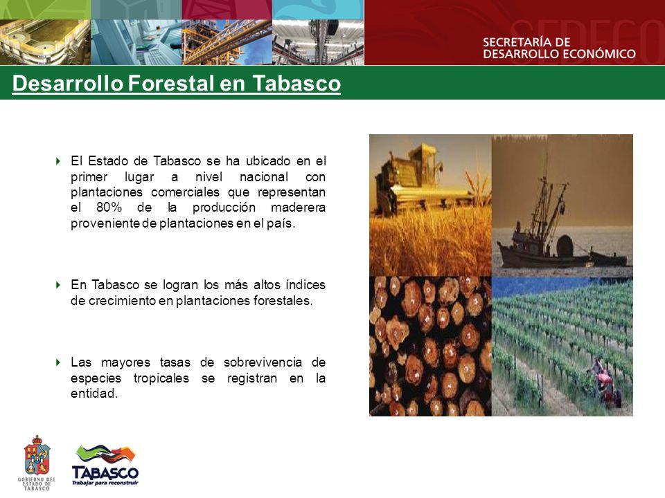 Desarrollo Forestal en Tabasco