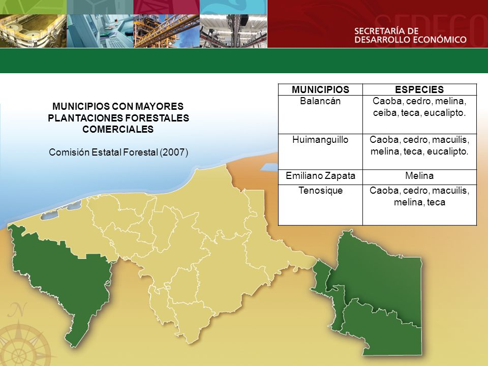 MUNICIPIOS CON MAYORES PLANTACIONES FORESTALES COMERCIALES