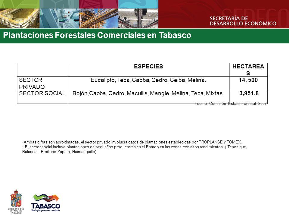 Plantaciones Forestales Comerciales en Tabasco