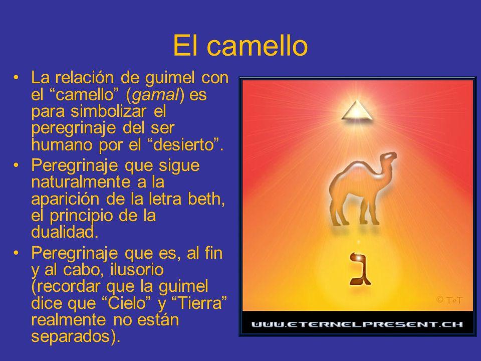 El camello La relación de guimel con el camello (gamal) es para simbolizar el peregrinaje del ser humano por el desierto .