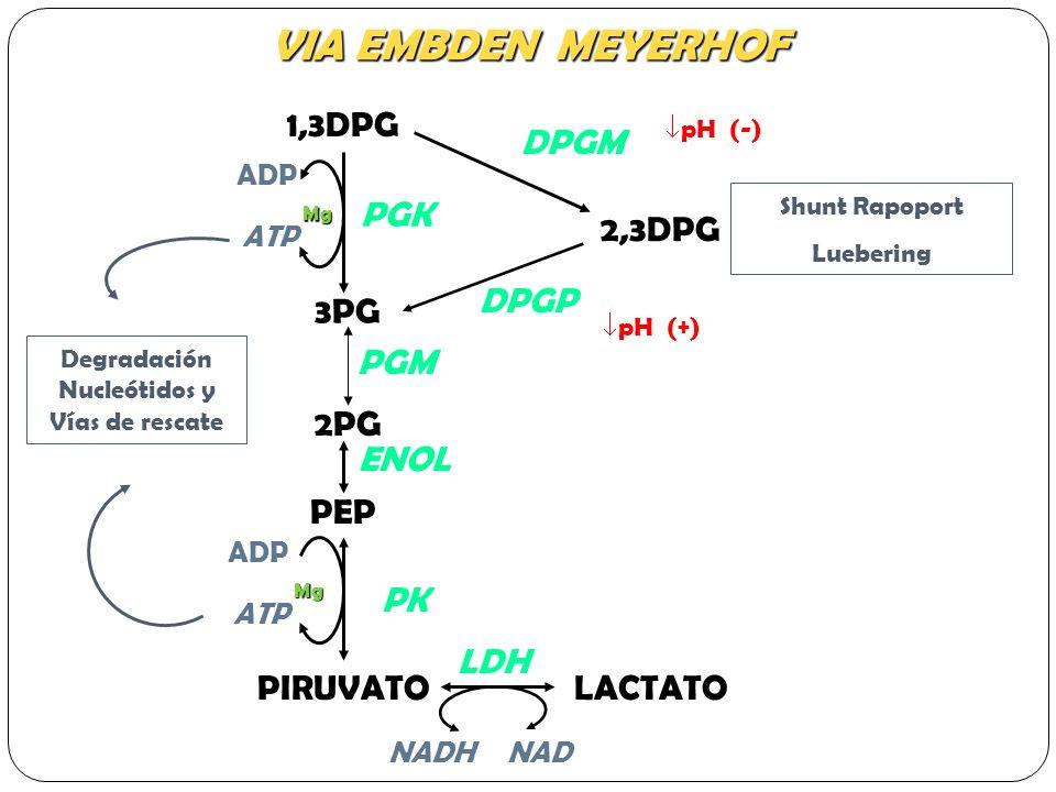 Metabolismo del eritrocito - ppt video online descargar