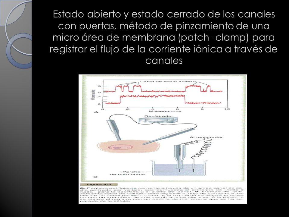 Estado abierto y estado cerrado de los canales con puertas, método de pinzamiento de una micro área de membrana (patch- clamp) para registrar el flujo de la corriente iónica a través de canales