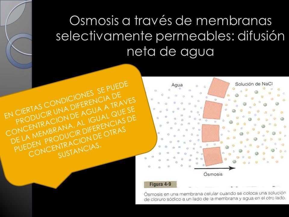 Osmosis a través de membranas selectivamente permeables: difusión neta de agua