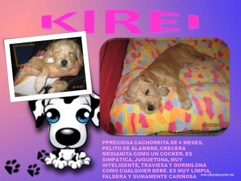 KIREI PPRECIOSA CACHORRITA DE 4 MESES,