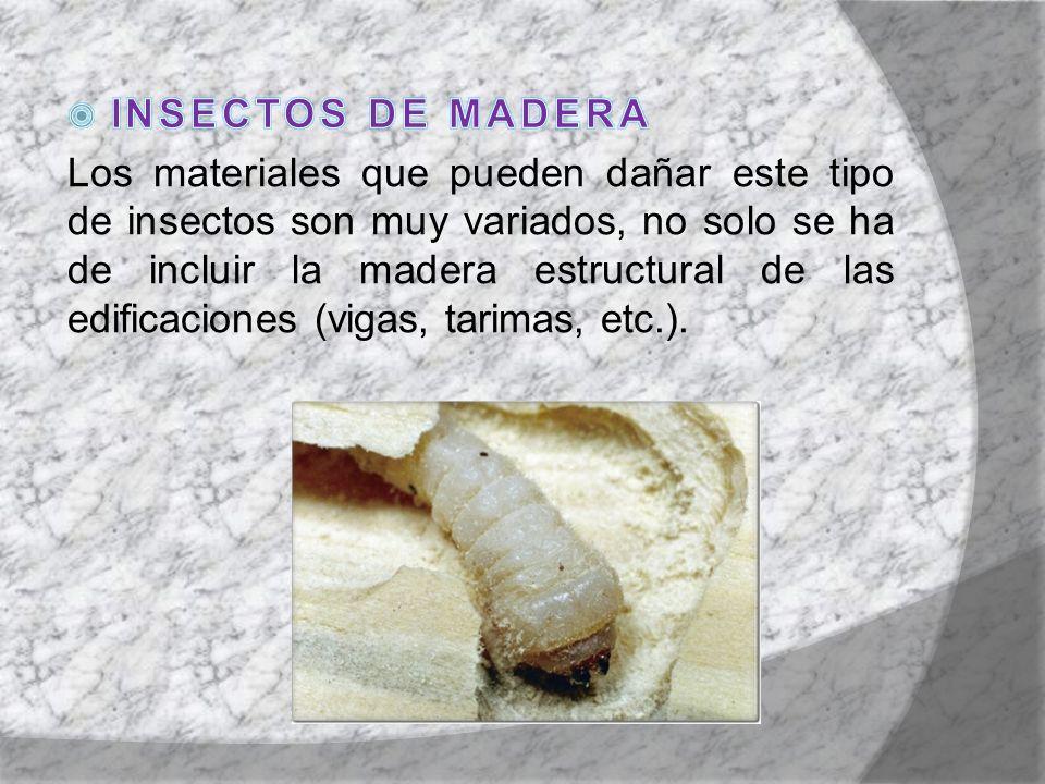 INSECTOS DE MADERA