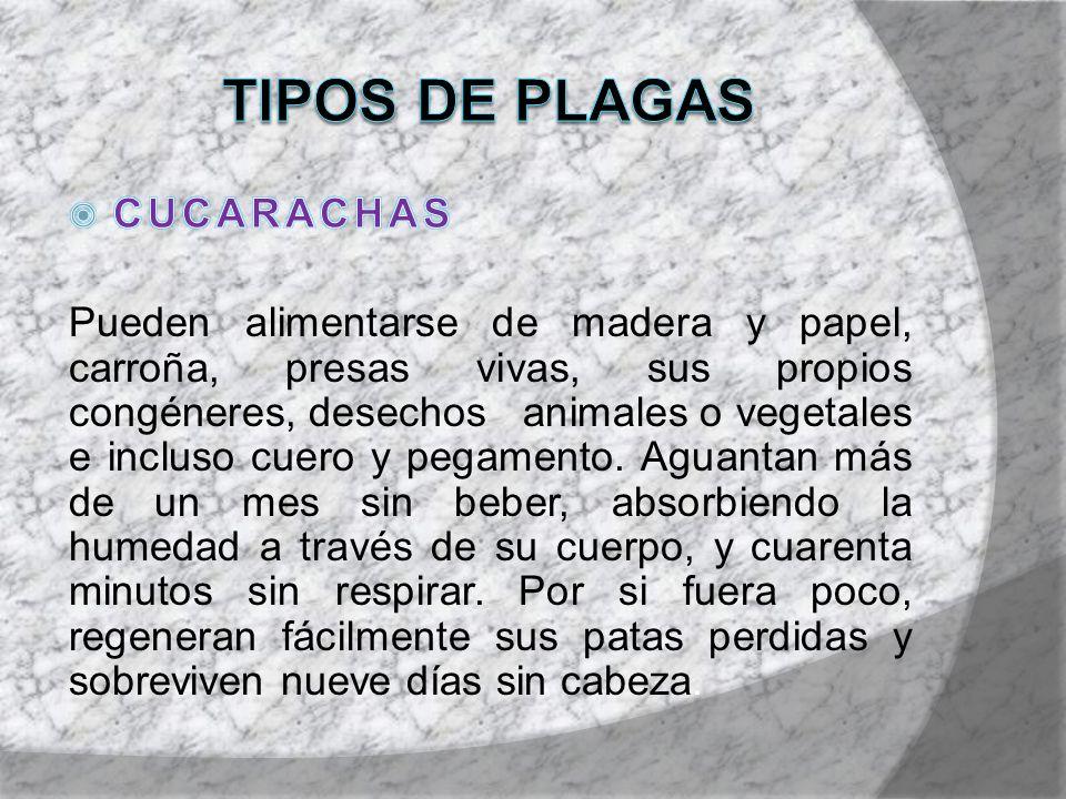 TIPOS DE PLAGAS CUCARACHAS