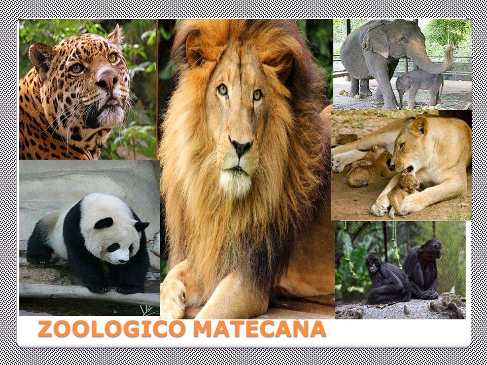 ZOOLOGICO MATECAÑA