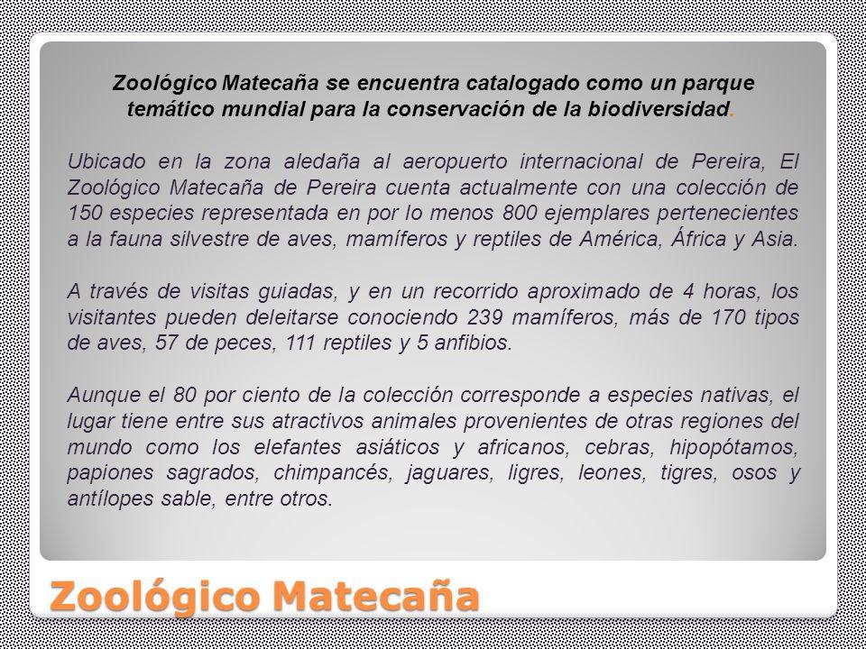 Zoológico Matecaña se encuentra catalogado como un parque temático mundial para la conservación de la biodiversidad.