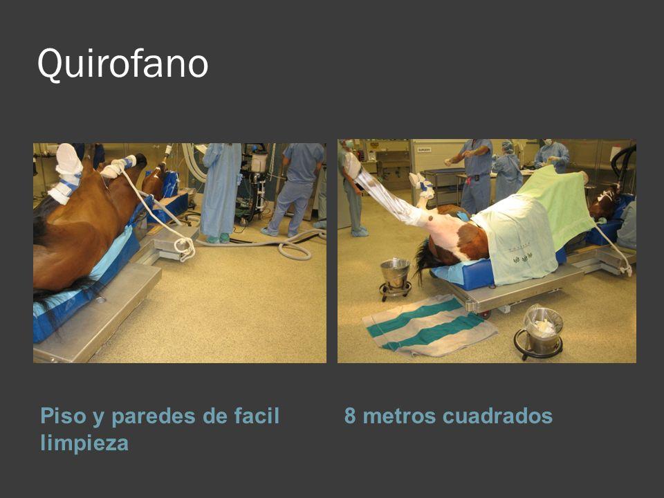 Unidad Quirurgica De Equinos Ppt Descargar