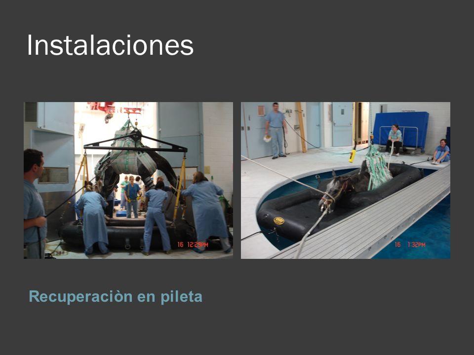 Instalaciones Recuperaciòn en pileta