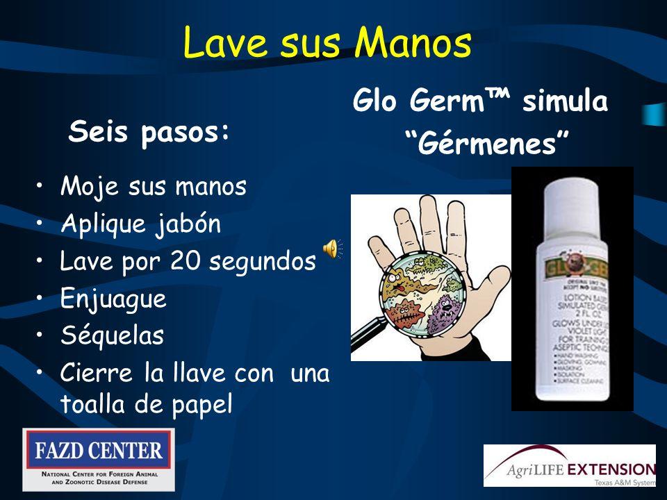 Lave sus Manos Glo Germ™ simula Gérmenes Seis pasos: Moje sus manos