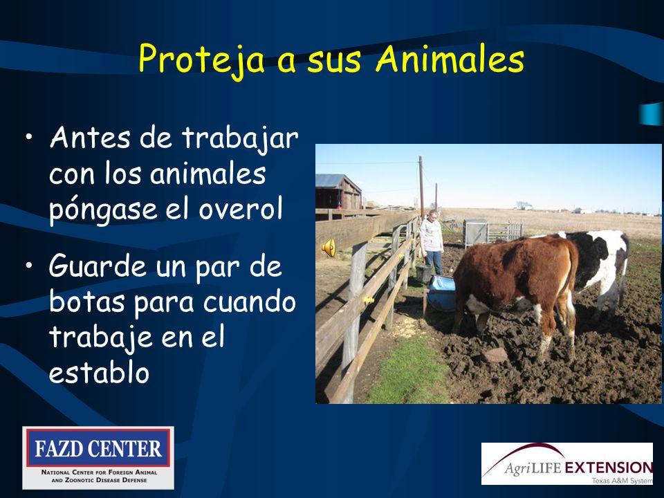 Proteja a sus Animales Antes de trabajar con los animales póngase el overol. Guarde un par de botas para cuando trabaje en el establo.