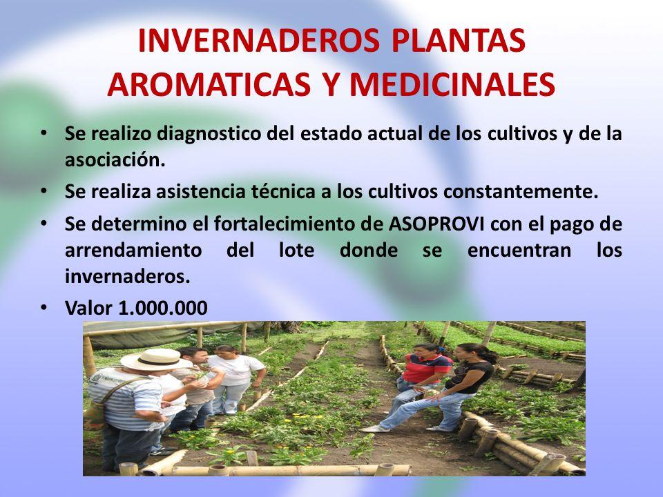 INVERNADEROS PLANTAS AROMATICAS Y MEDICINALES