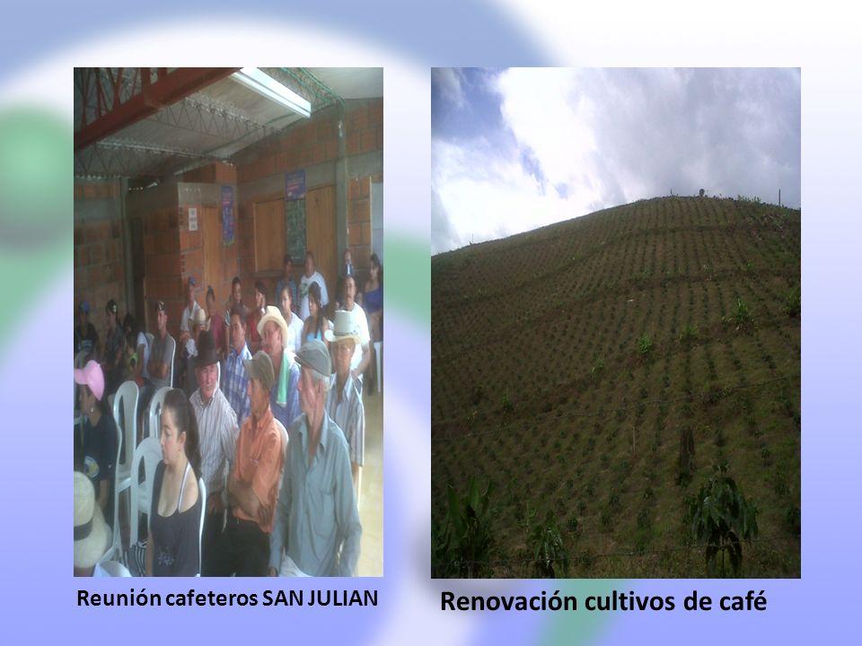 Renovación cultivos de café