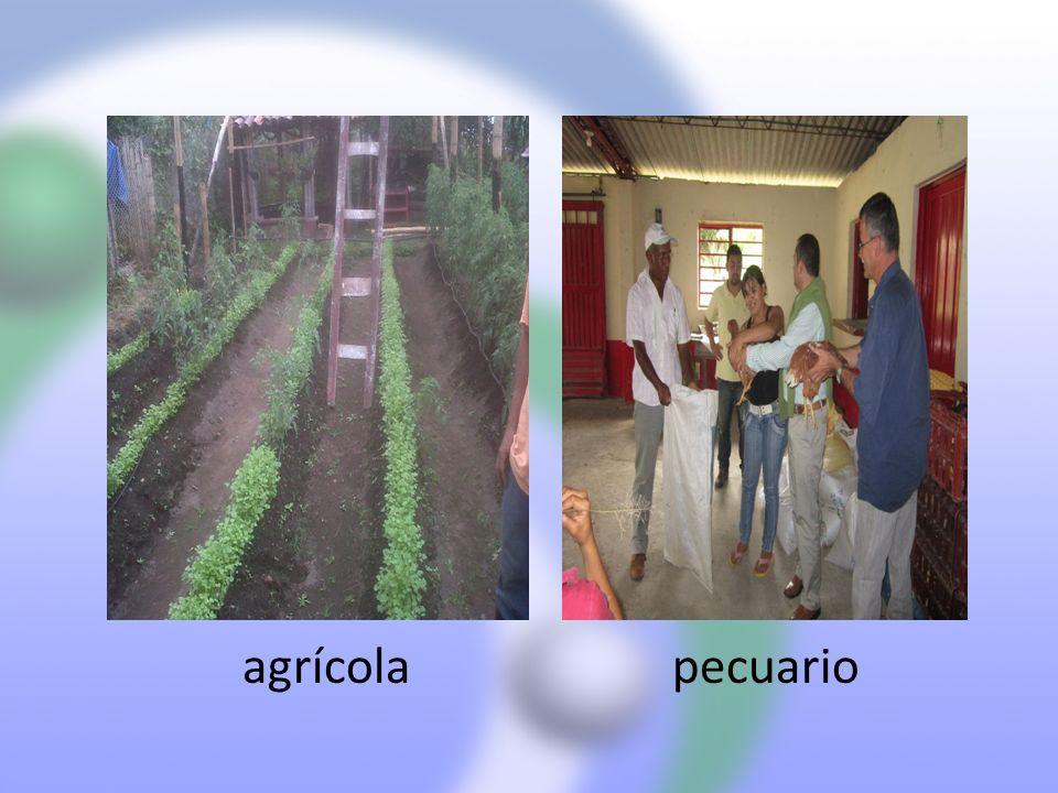 agrícola pecuario