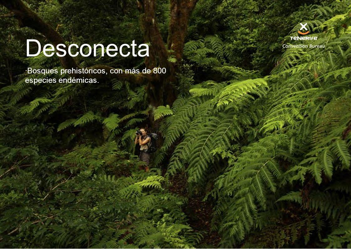 Desconecta Bosques prehistóricos, con más de 800 especies endémicas.