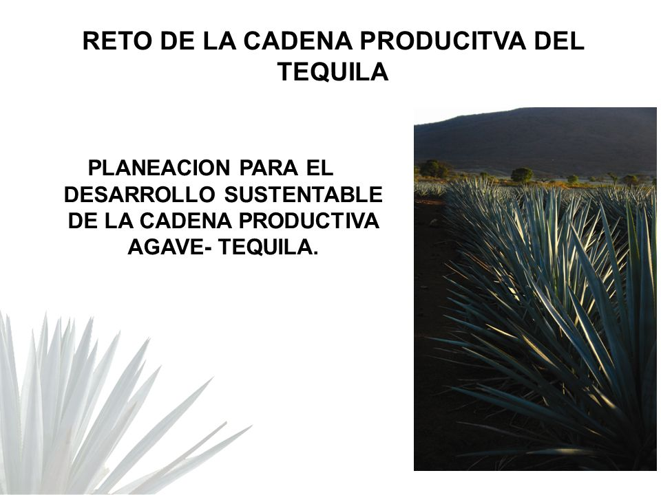 RETO DE LA CADENA PRODUCITVA DEL TEQUILA