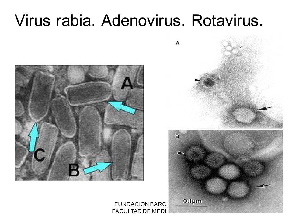 Virus rabia. Adenovirus. Rotavirus.