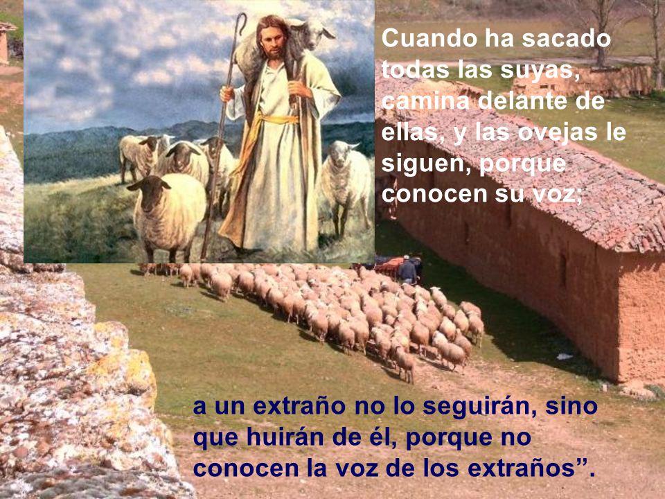 Cuando ha sacado todas las suyas, camina delante de ellas, y las ovejas le siguen, porque conocen su voz;