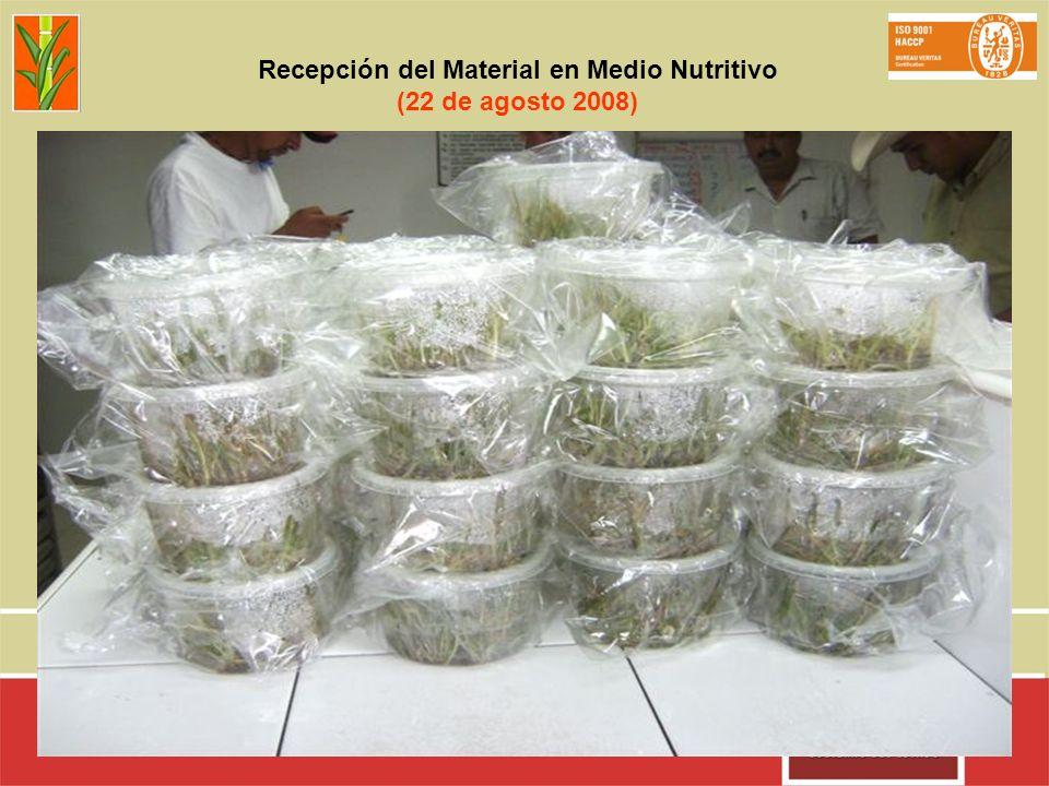 Recepción del Material en Medio Nutritivo