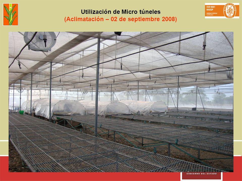 Utilización de Micro túneles (Aclimatación – 02 de septiembre 2008)