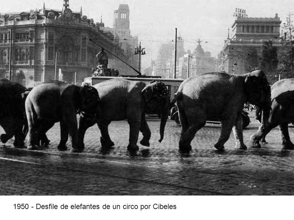 1950 - Desfile de elefantes de un circo por Cibeles