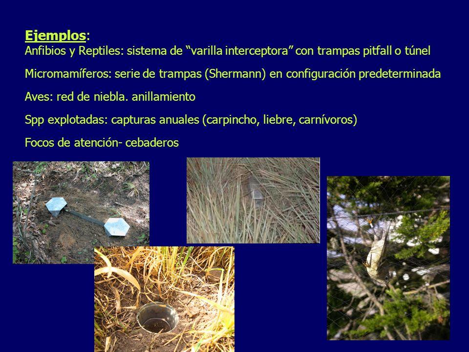 Ejemplos: Anfibios y Reptiles: sistema de varilla interceptora con trampas pitfall o túnel.