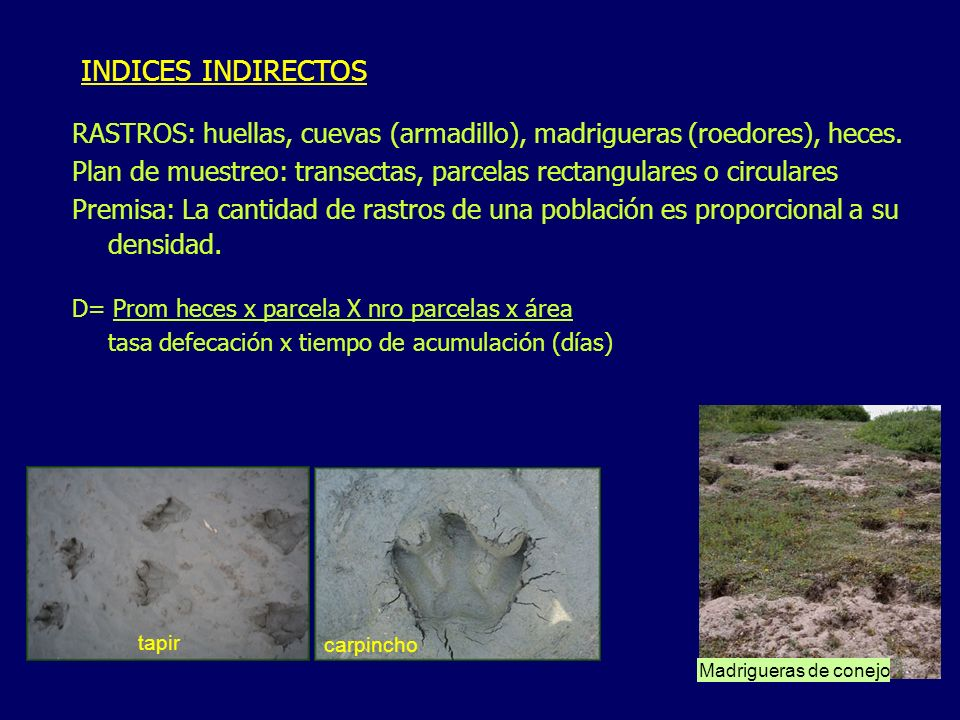 INDICES INDIRECTOS RASTROS: huellas, cuevas (armadillo), madrigueras (roedores), heces.