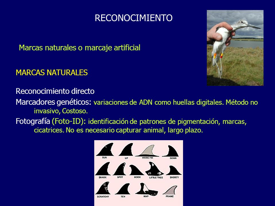 RECONOCIMIENTO Marcas naturales o marcaje artificial MARCAS NATURALES
