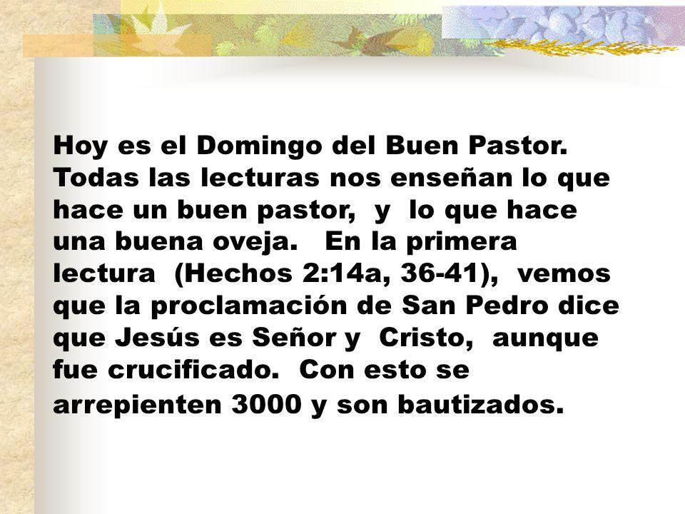 Hoy es el Domingo del Buen Pastor