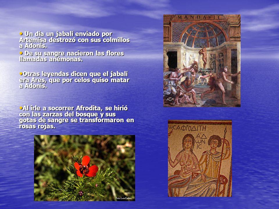 Un día un jabalí enviado por Artemisa destrozó con sus colmillos a Adonis.